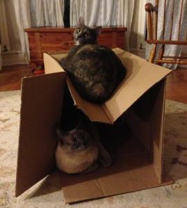 aggie & judy box