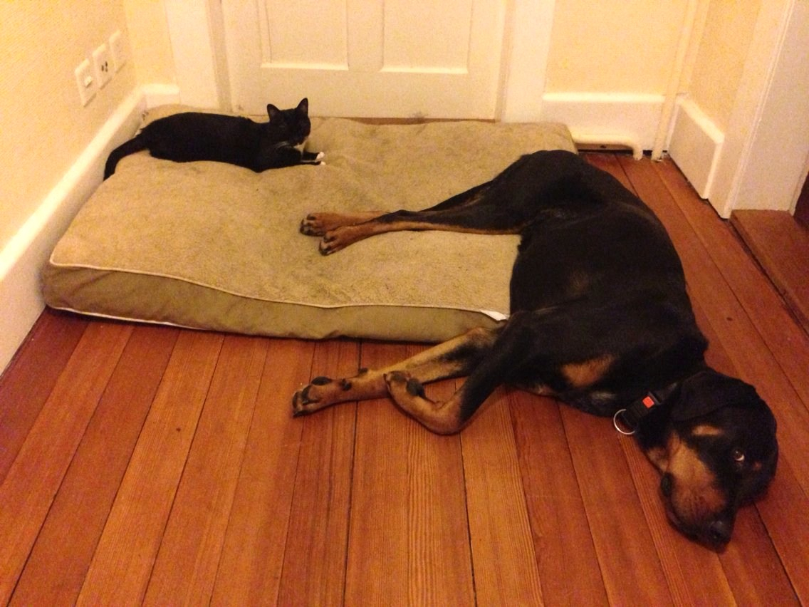 West La Pet Sitting Paws Itively The Best Care In Los