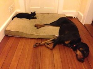 kitty and jezebel