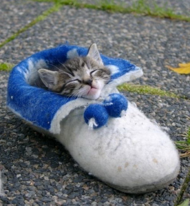 kitty shoe