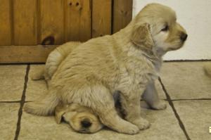 puppy seat