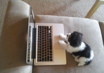puppy email